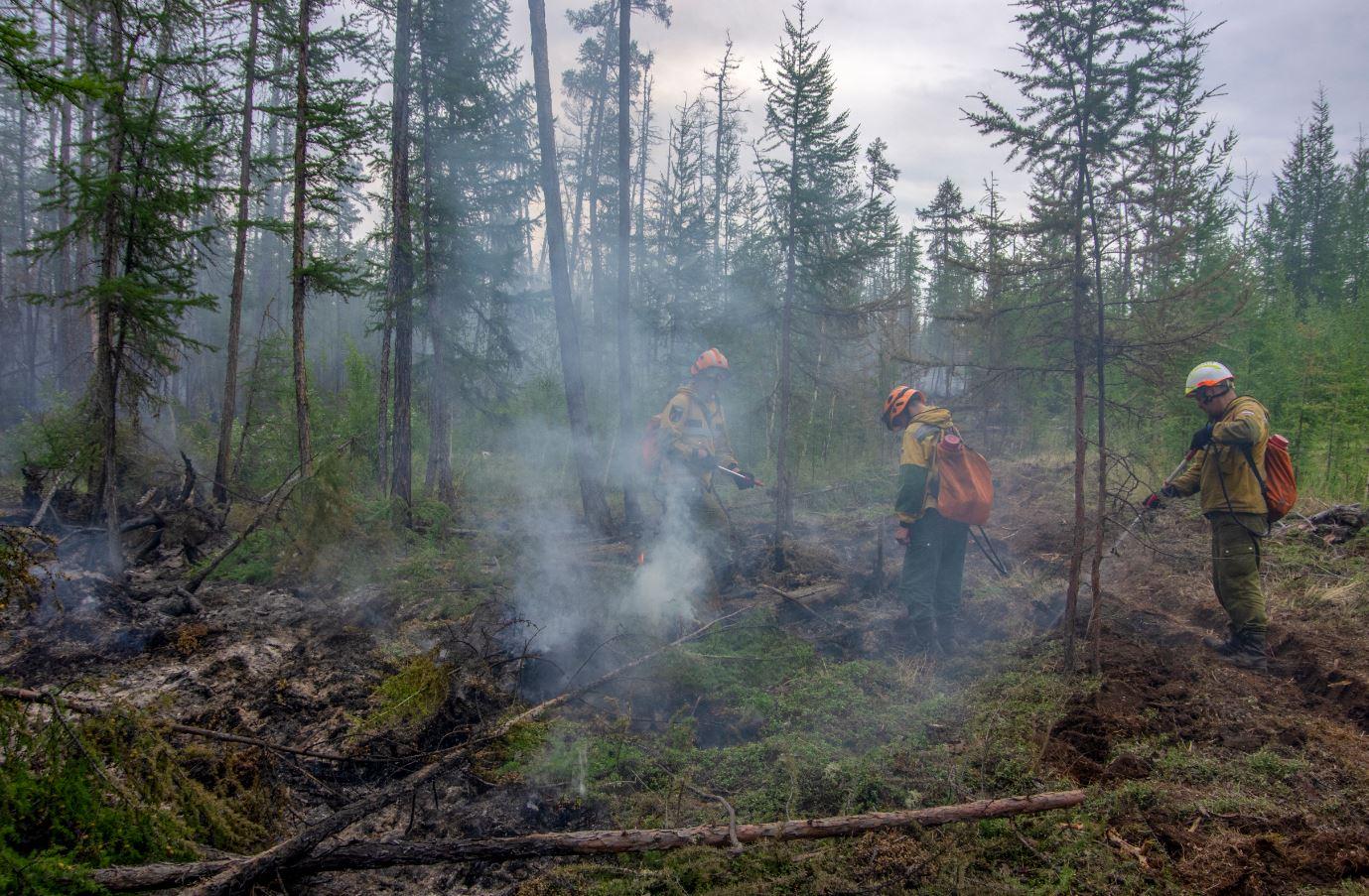 У села Кустур приступили к ликвидации лесного пожара