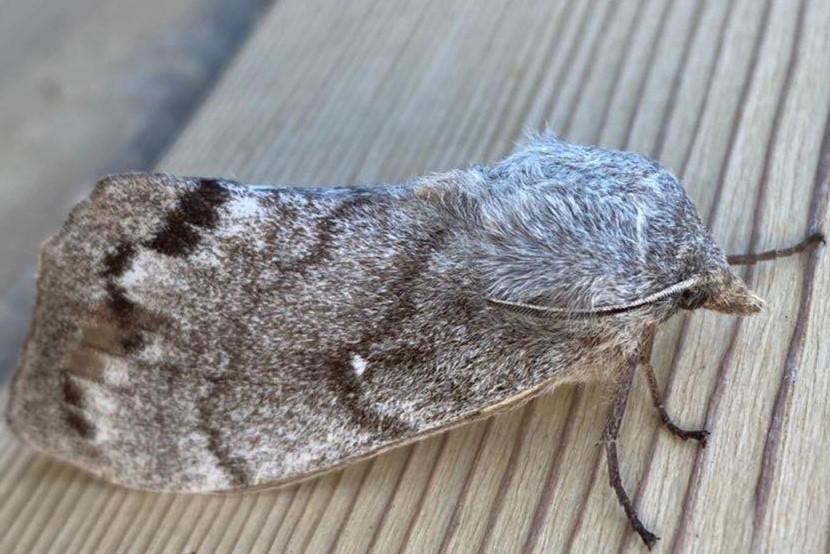 Жители Якутска начали замечать необычных бабочек