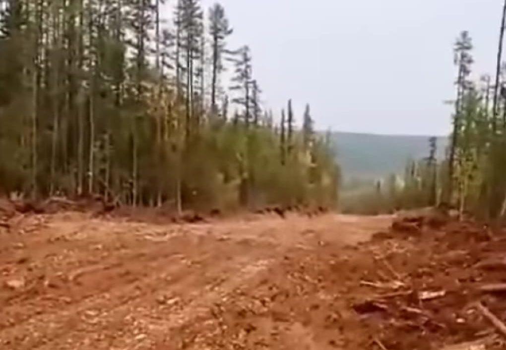 Установлен факт незаконной рубки леса в Алданском районе Якутии