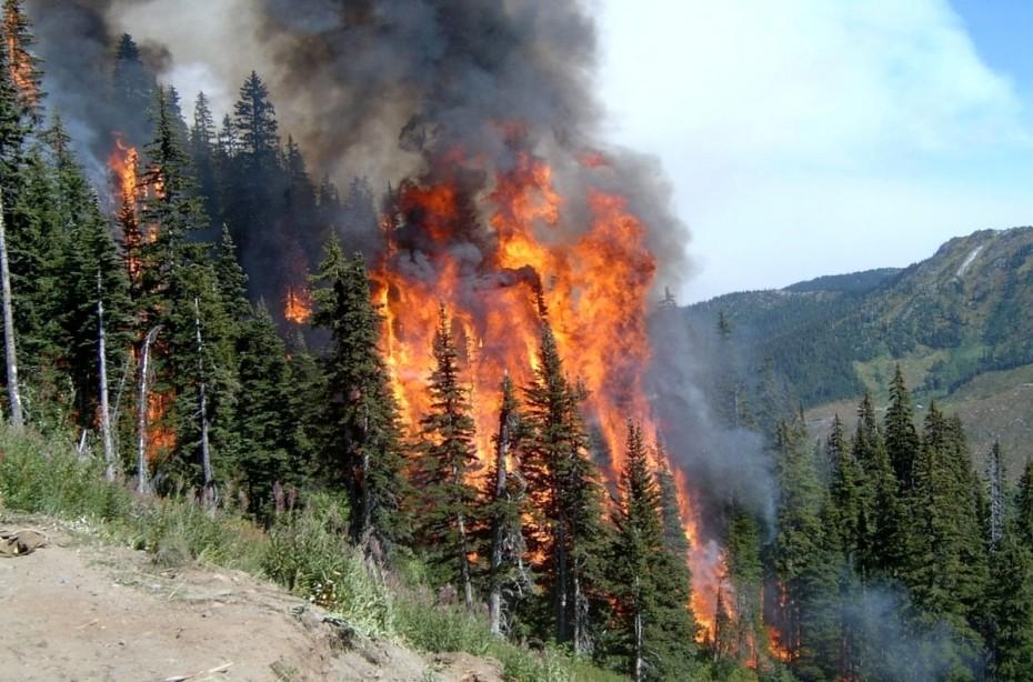 В Амгинском районе поддержат пострадавших от лесных пожаров аграриев