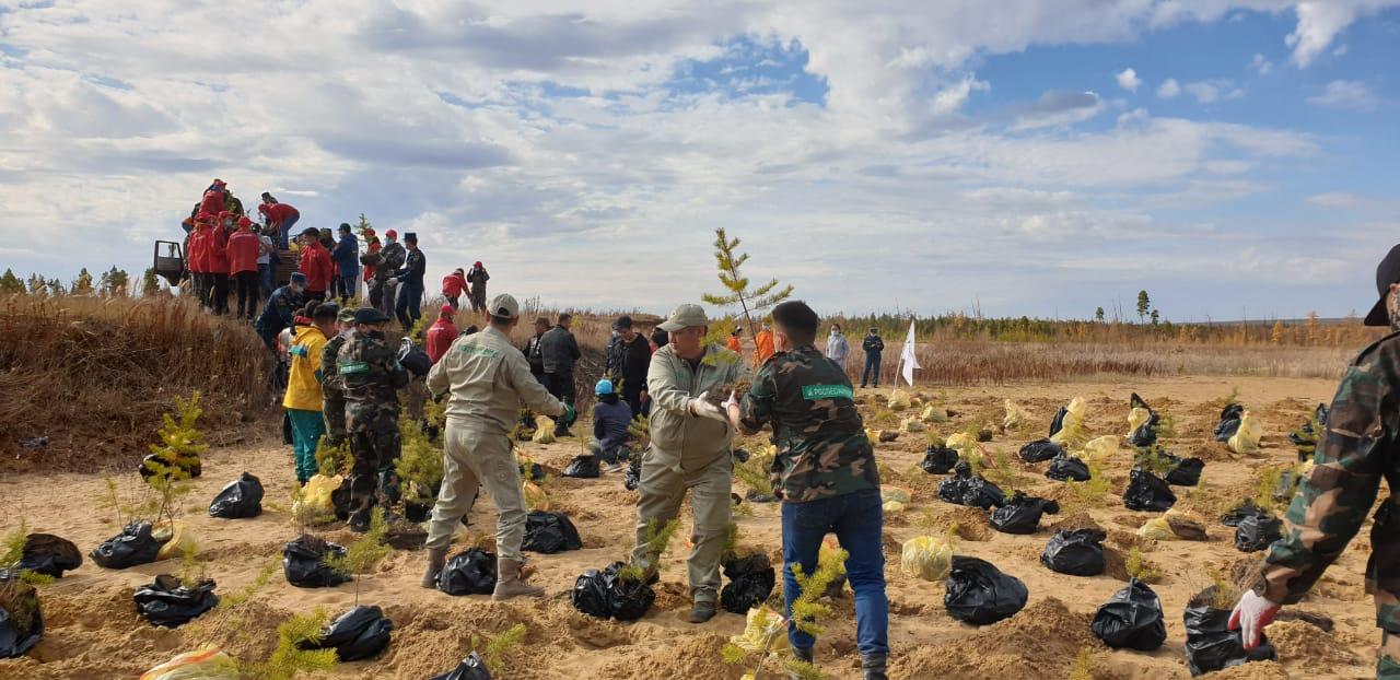 Якутлесресурс за 2020 год восстановил около 250 гектаров леса