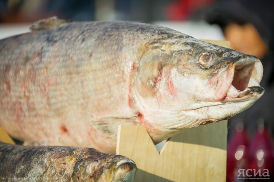 Долголетие жителей, рыбная фауна и водные ресурсы стали объектами исследования якутских ученых