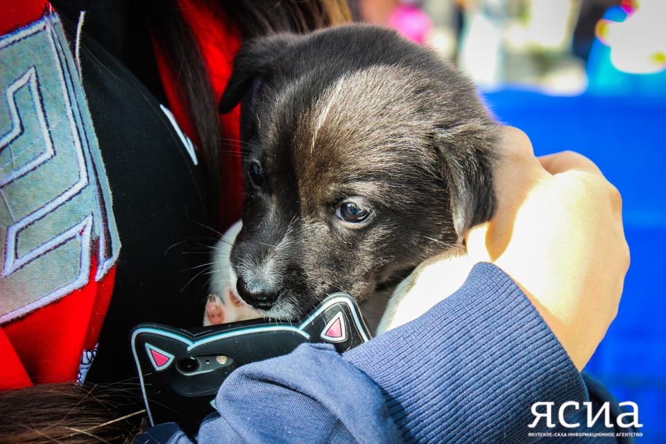 В Якутске состоится ярмарка-пристройство бездомных животных