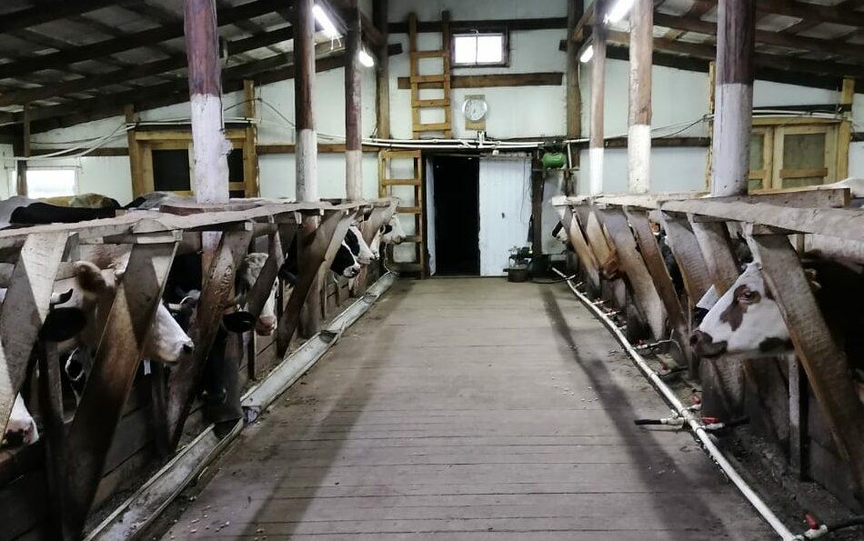 В Хангаласском районе фермеры готовятся к зимне-стойловому содержанию скота
