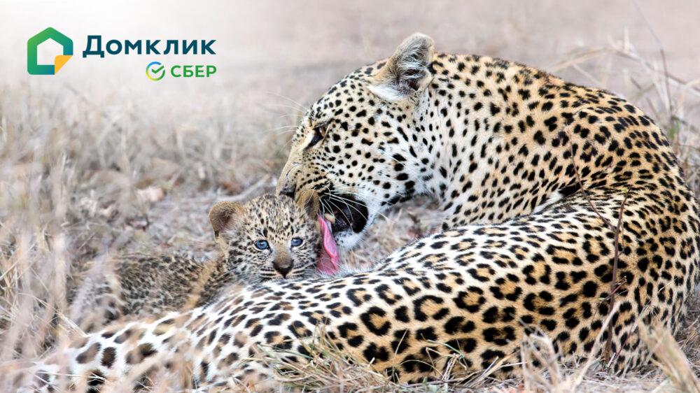 Сбербанкв рамках Дальневосточной ипотекивыдал жителям Якутииболее7,8млрд рублей