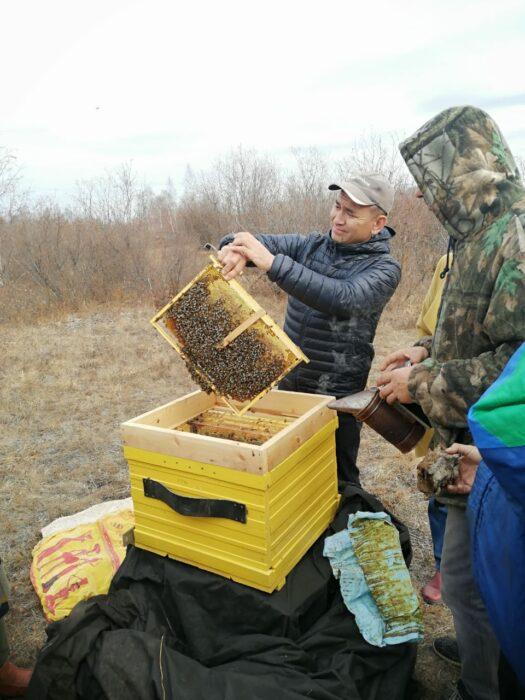 пчеловодство пчеловоды Якутский сельхозтехникум ЯСХТ Амгиснкий улус