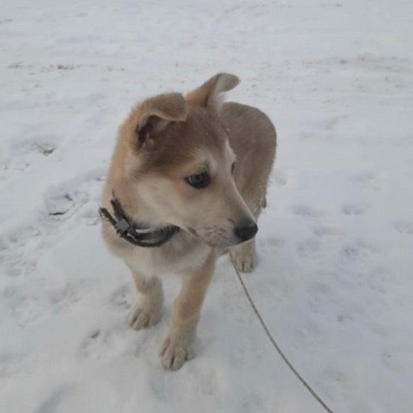 """ВИДЕОФАКТ: Собака Бартон, которая научилась говорить """"Мама"""""""