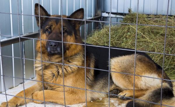 Департамент ветеринарии Якутии ответил на информацию про приют для безнадзорных животных