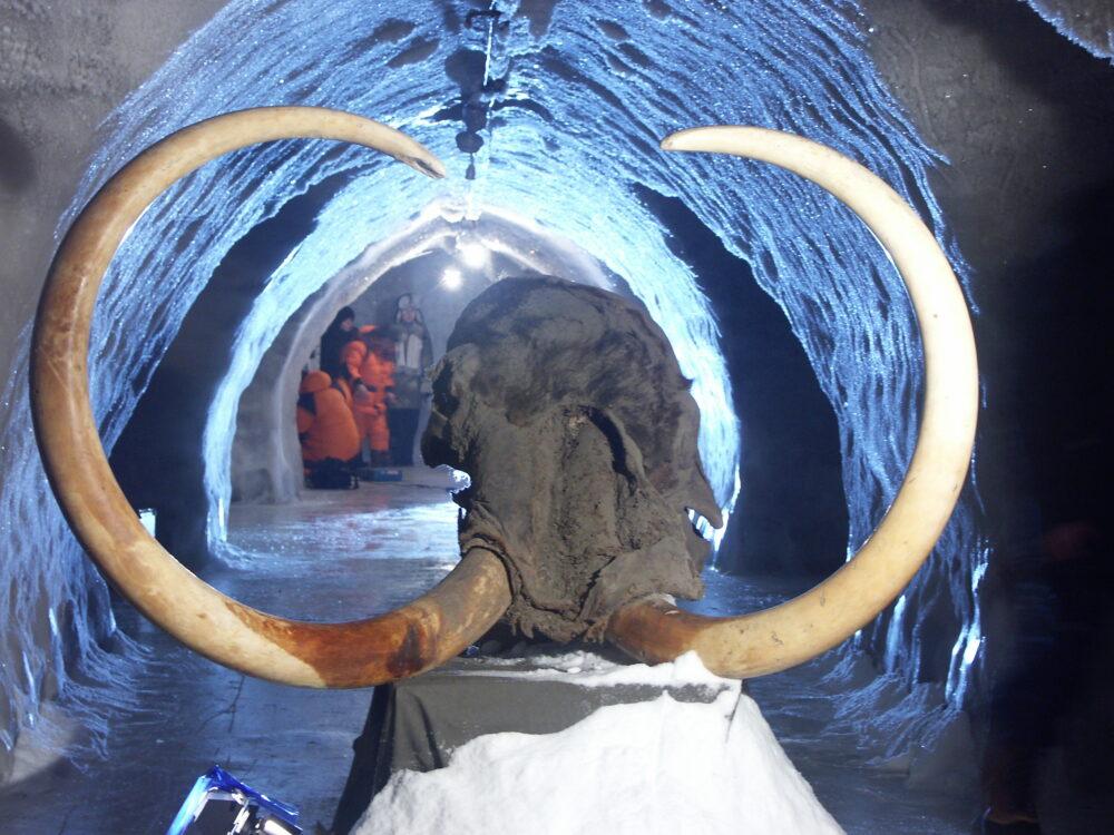 Всемирный центр мамонта включен в Стратегию развитияАрктической зоны РФ