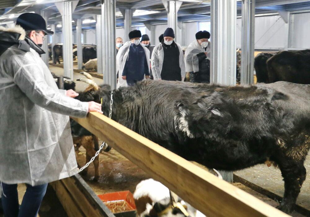 В Садынском наслеге Якутии построили животноводческий комплекс