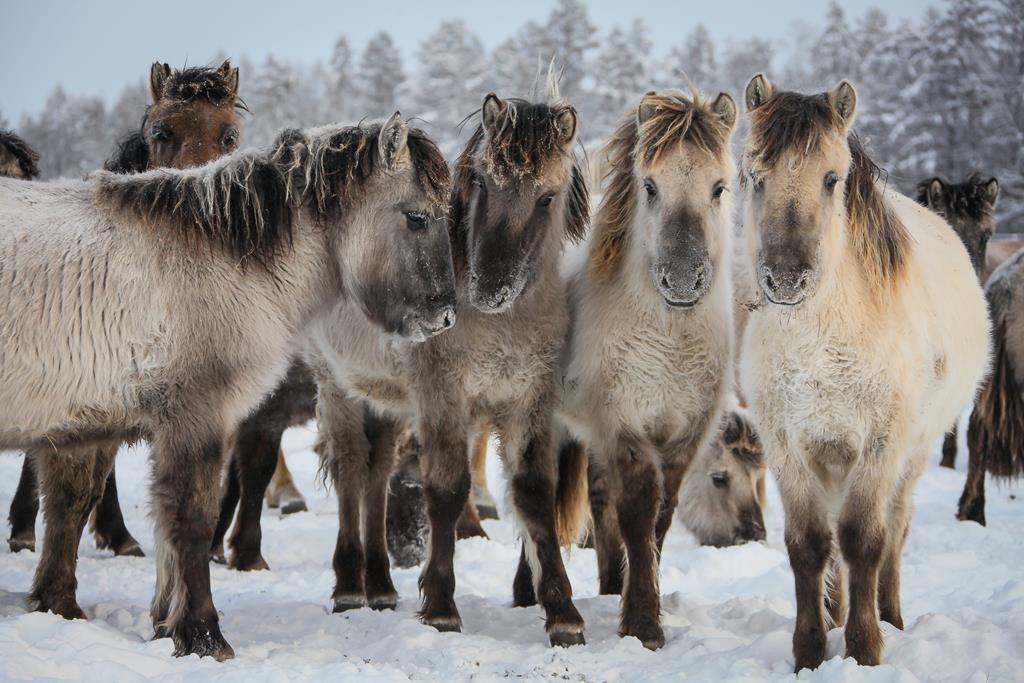 На дальневосточном гектаре фермер организовал коневодческую базу в Усть-Алданском районе Якутии