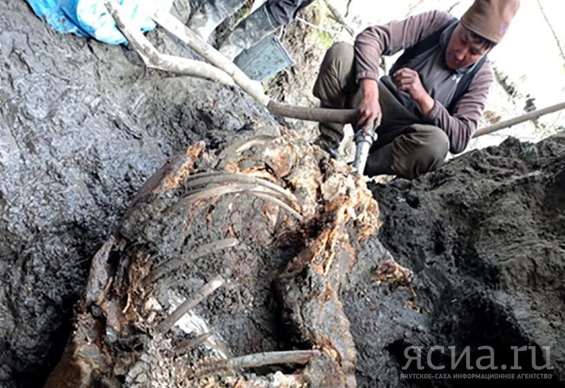 В Якутии нашли тушу шерстистого носорога уникальной сохранности
