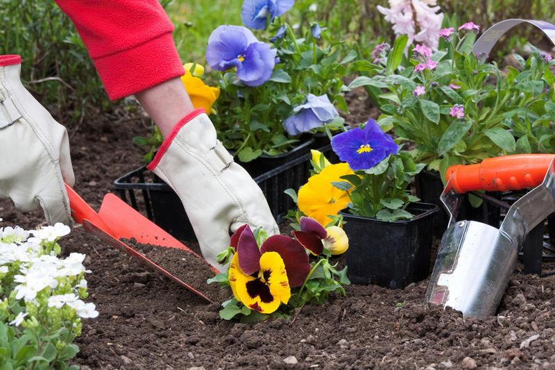 В школах Якутии введут стандарт обустройства территорий с применением растений