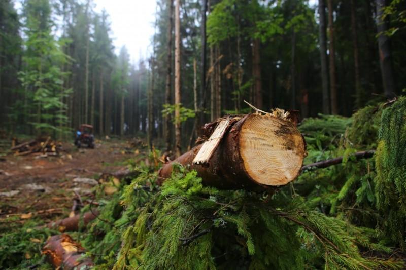 Поправки помогут декриминализировать отрасль. В Лесной кодекс внесут изменения