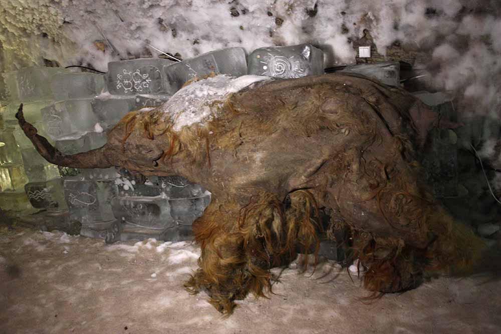Якутские сенсации: Главные палеонтологические находки 21 века