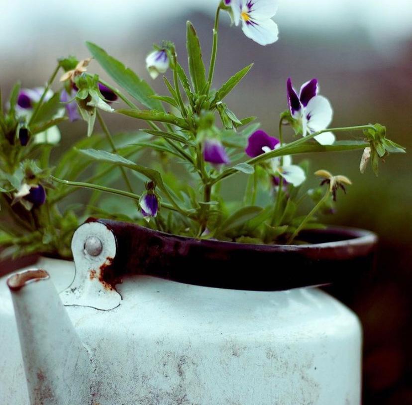 Цветы и пейзажи Алены Кычкиной. В свободное время волонтер-медик занимается фотографией
