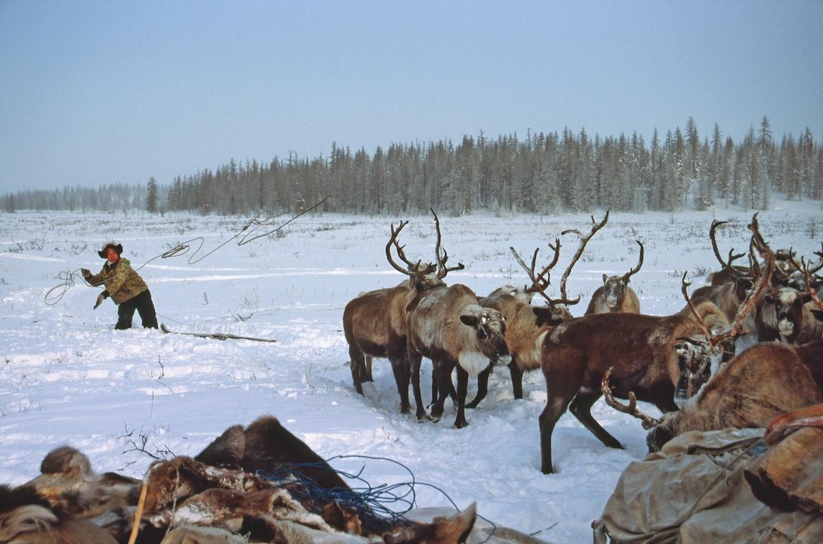 В этом году будет проведен конкурс для поддержки молодых оленеводов Якутии