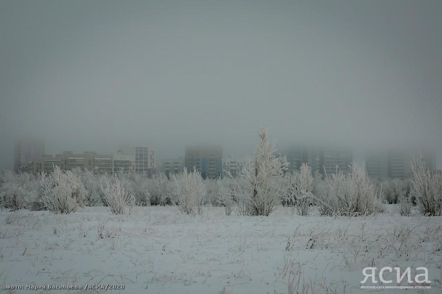 зима Фото: Мария Васильева, ЯСИА