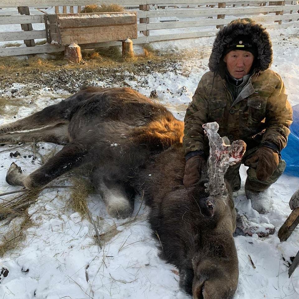 Якутская природоохранная прокуратура организовала проверку в отношении владельцатуркомплекса, где умер лось