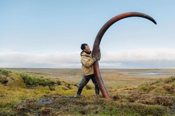В Якутии продали около двух тонн бивней мамонта на электронных торгах