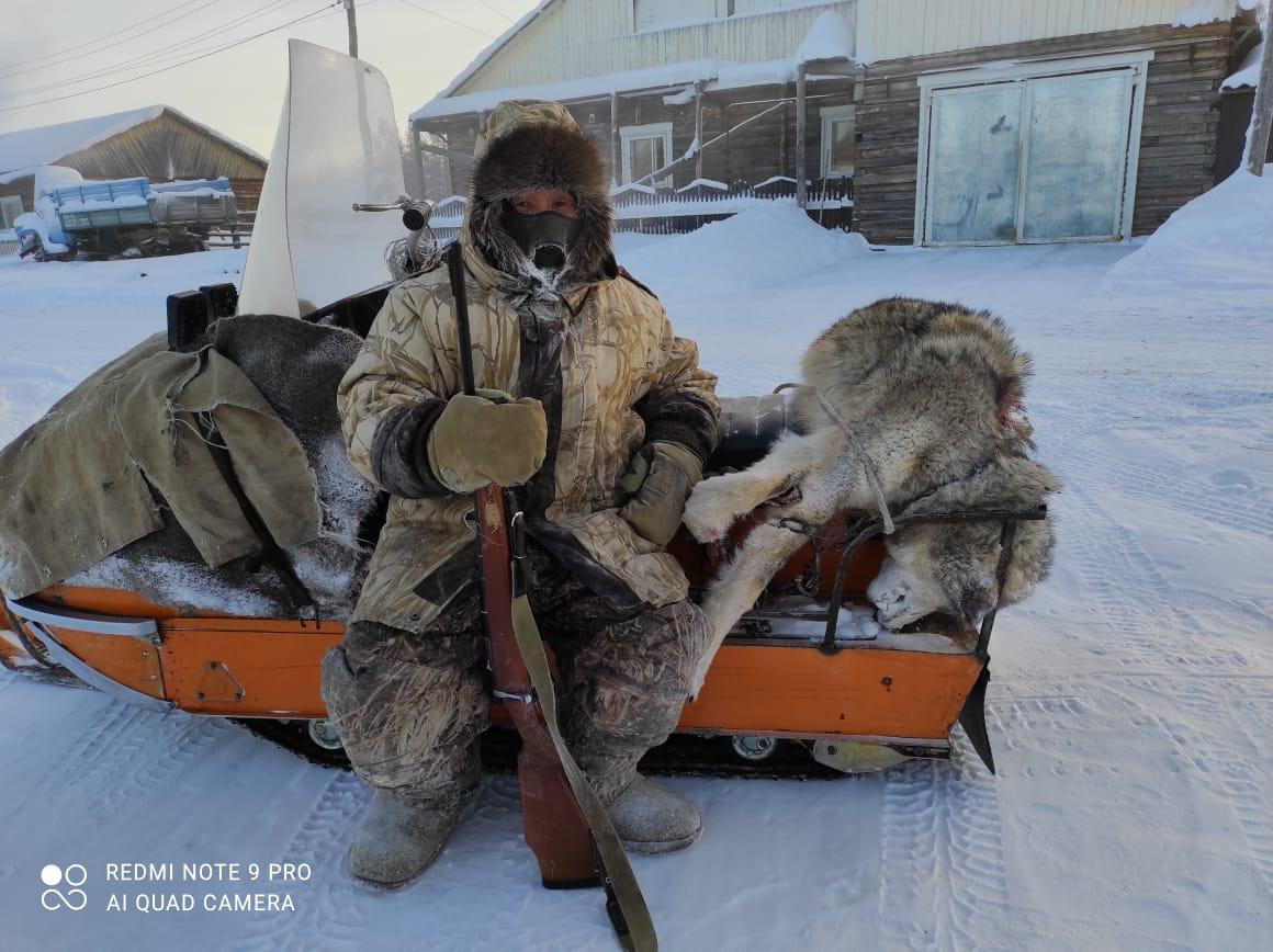 С начала года в Вилюйском районе Якутии исследовали 13 шкур добытых волков на наличие инфекционных болезней