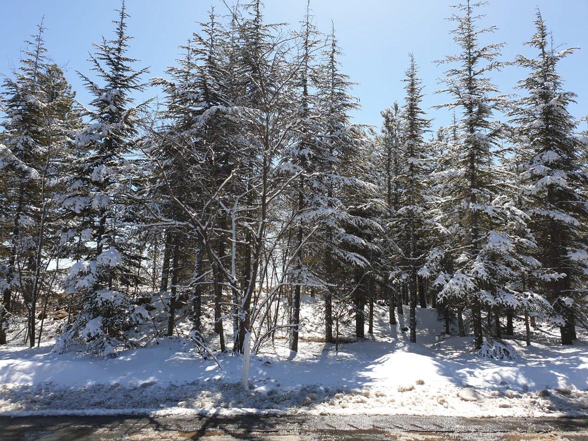 Аукцион на заключение договоров аренды лесных участков объявили в Якутии
