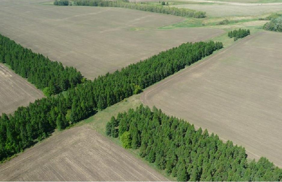 В Якутии совершенствуется правовое регулирование проведения агролесомелиорации