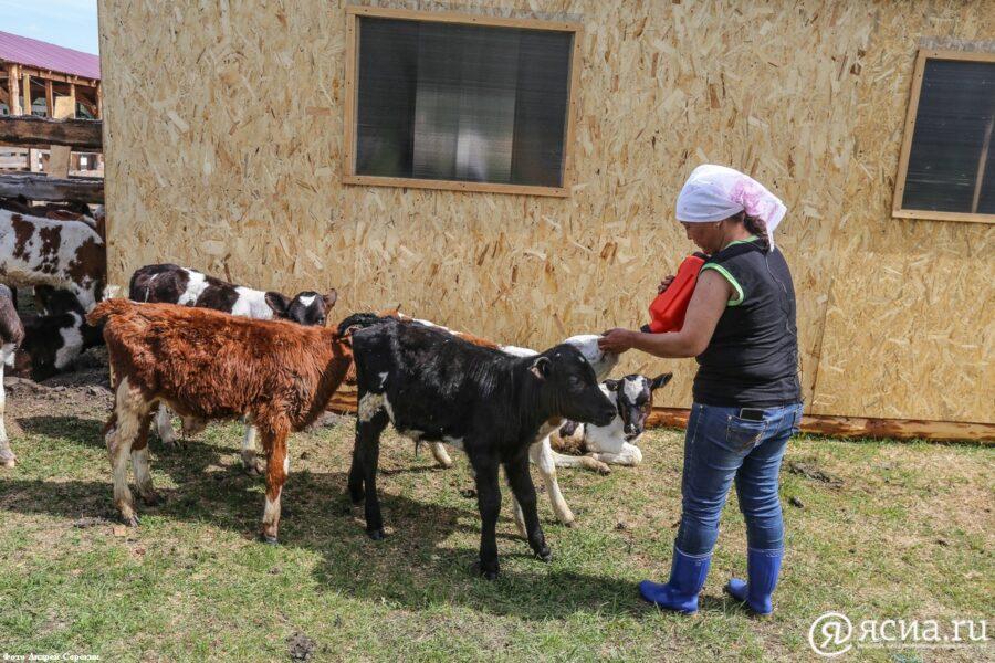 На поддержку начинающих фермеров Якутии выделено 113 млн рублей из федерального бюджета