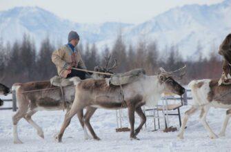 Вопросы комфортного проживания человека в Арктике обсудили в научно-образовательном консорциуме