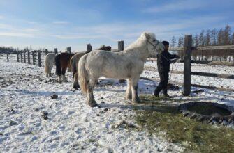 Лошадей, на которых якутяне должны доехать до Лондона, в пути осматривают ветеринары