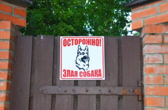 Где и как можно выгуливать собак бойцовской породы