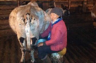 Эвено-Бытантайский фермер Матрена Баишева: Сельским хозяйством на Севере заниматься сложно, но можно
