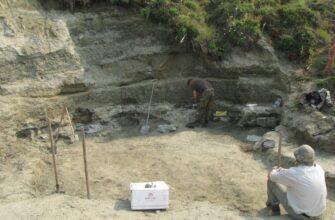 Уроки палеостоматологии. Ученые исследовали более 60 зубов стегозавров из Якутии
