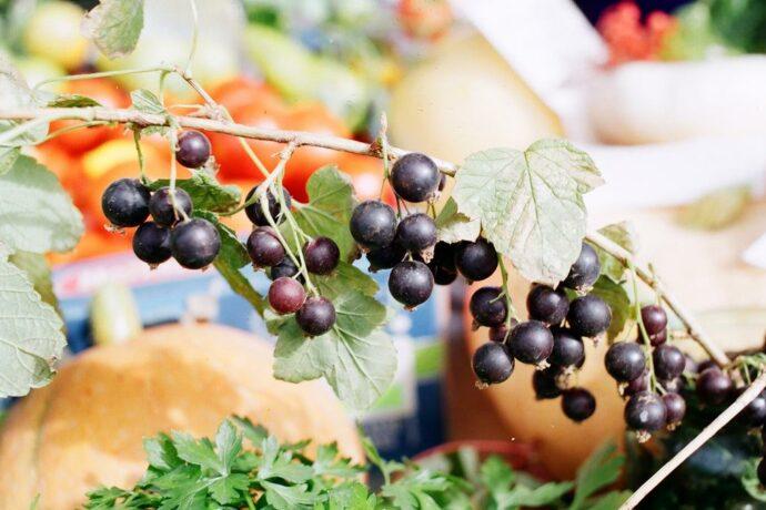 """""""Агростартап"""": Как начинающий фермер готовится организовать ягодное хозяйство"""