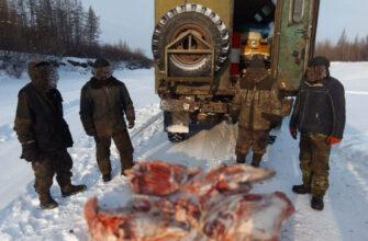 В Якутии полицейские  выявили факт незаконной добычи лося