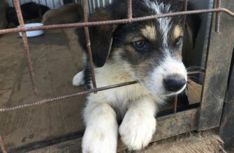 В Якутске хотят создать филиал Пункта передержки безнадзорных животных