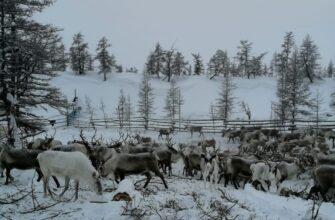 В Усть-Янском районе идет весенняя корализация