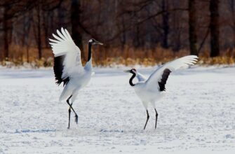 """Национальный парк """"Кыталык"""" защищает более 70% гнездовий восточносибирской популяции стерха"""