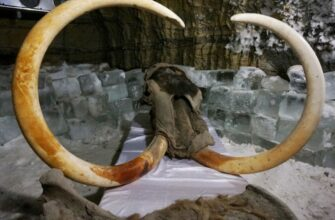 В Якутии хотят создать криохранилища мамонтовой фауны и семян растений