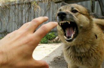 В селе Ытык-Кюель Якутии домашняя собака напала на ребенка