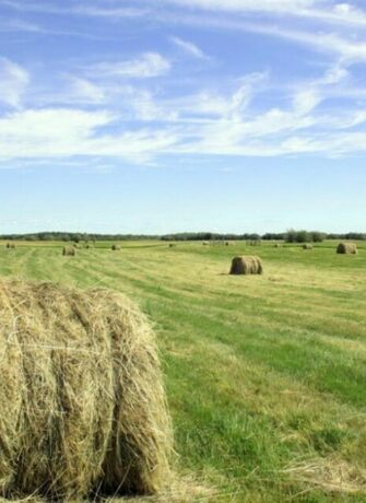 Инфографика. Сельское хозяйство: Главные факты