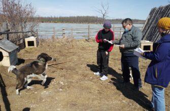 Электронную идентификацию собак проводят в районах Якутии