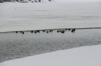 В Булунском районе готовятся к началу сезона весенней охоты