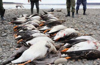 В Якутии у нарушителей правил охоты изъяли добычу и ружья