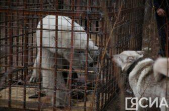 Спасенного белого медведя вывезут в Москву
