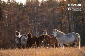 6,3 млрд рублей направят в этом году на поддержку животноводства в Якутии