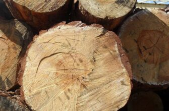 Якутия за три месяца экспортировала 634 кубометра древесины