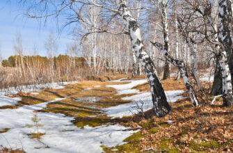 Облачно и +14 градусов днем. Прогноз погоды на выходные в Якутске