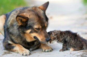 Владимир Путин поручил кабмину подготовить законопроект о ведении учета домашних животных