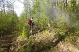 Почти 700 человек из федерального резерва тушат пожары в Якутии